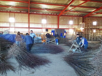Production fruit trees plants Bosnia