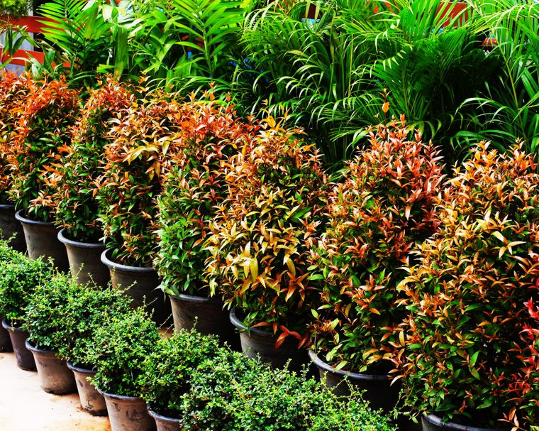 ornamental plants production East Europe